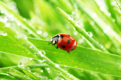 Сильная роса в этот день предвещала хороший урожай (Фото: Yellowj, Shutterstock)
