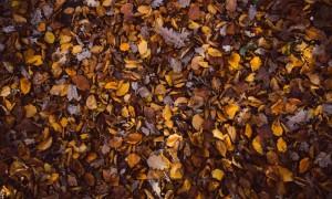 leaves-1246616_960_720