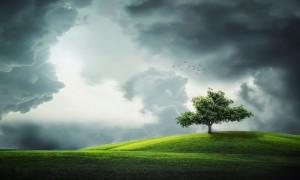 tree-8320791280